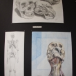 Three skeletal study drawings