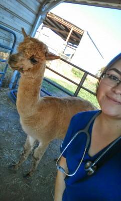 Ana with an alpaca during an examination. (Photo courtesy of Ana Martinez.)